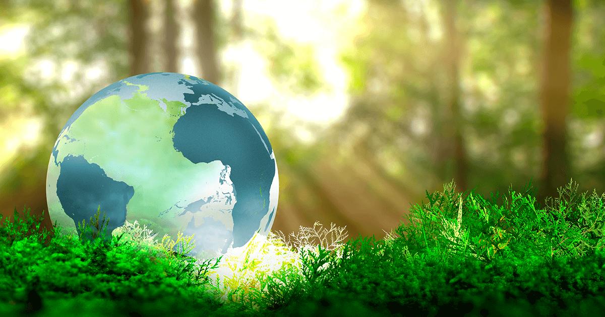 Catharine Hill e o meio ambiente