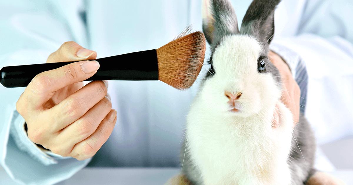 Os testes em animais e a realidade da população
